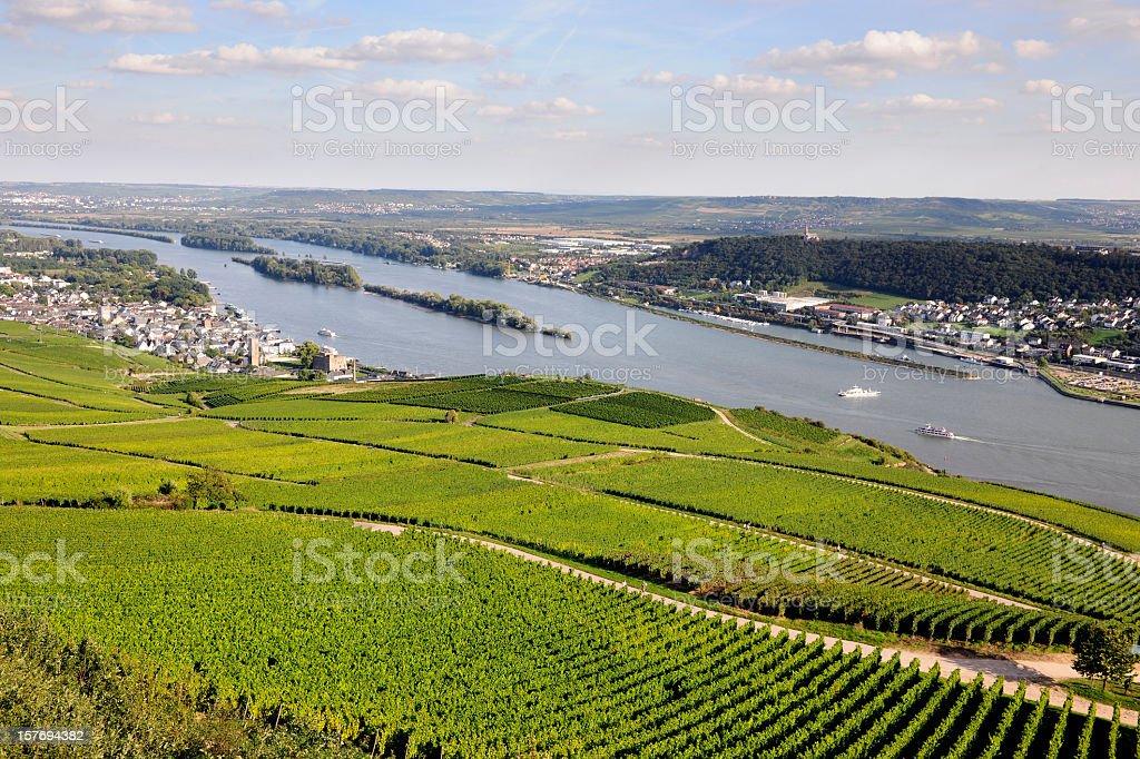 Rheingau Riesling Vineyards stock photo