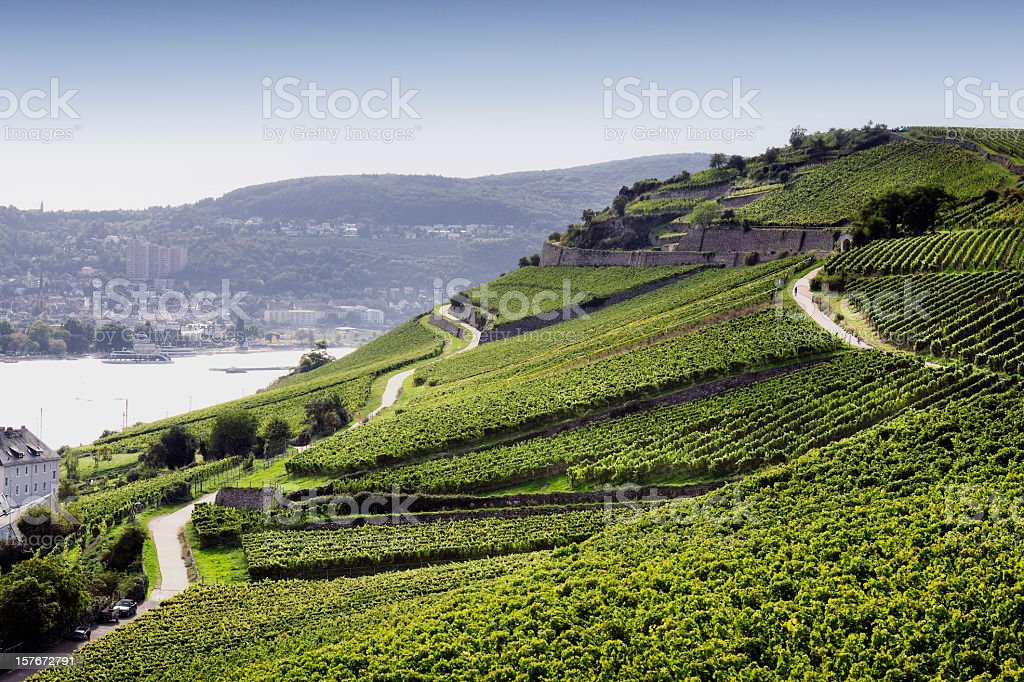Rheingau Riesling Vineyards zoomed out view stock photo