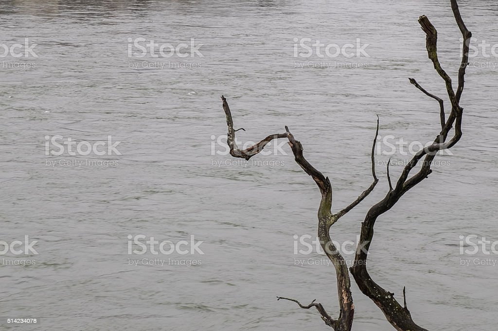 Rhine flow stock photo