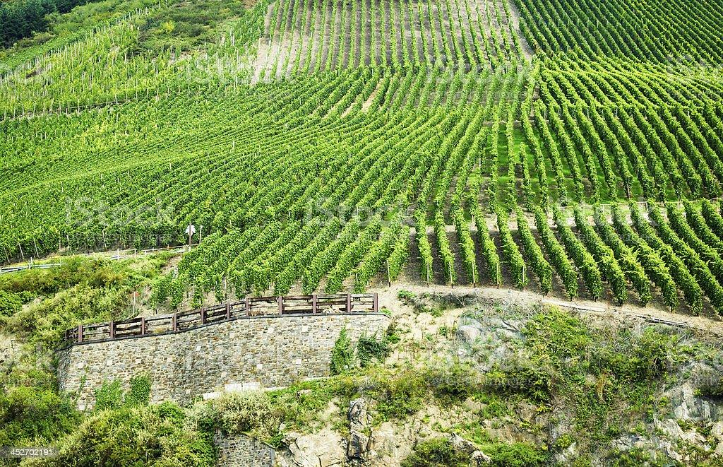 Rhineland Vineyards stock photo