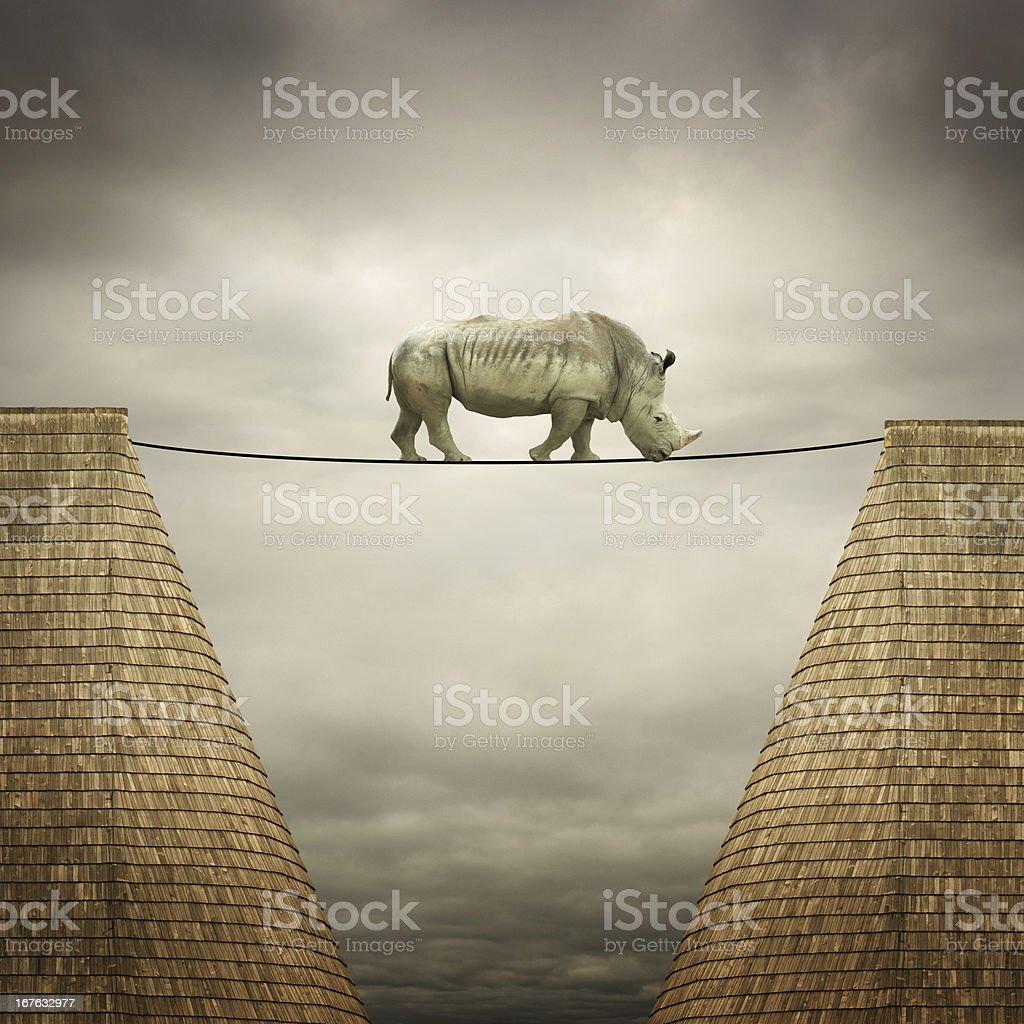 rhino balanced on the line stock photo