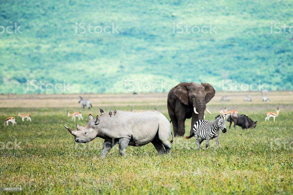 Rhino, elephant and Zebra  in the Ngorongoro Crater Tanzania stock photo