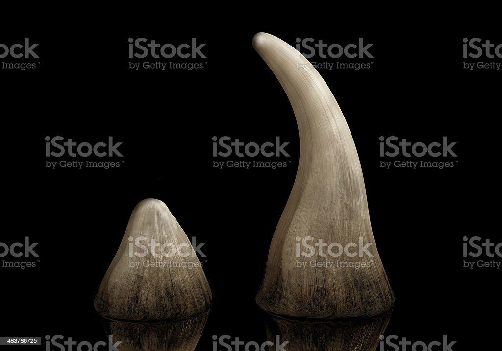 Rhino horn stock photo