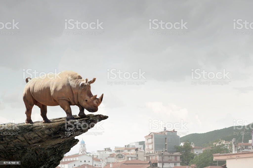Rhino on rock top . Mixed media stock photo