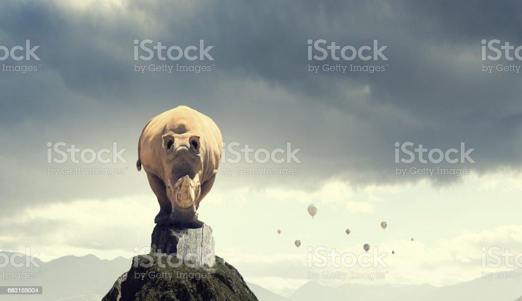 Rhino on rock top stock photo