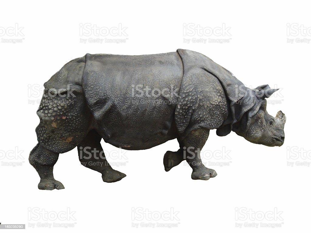 Rhino stock photo