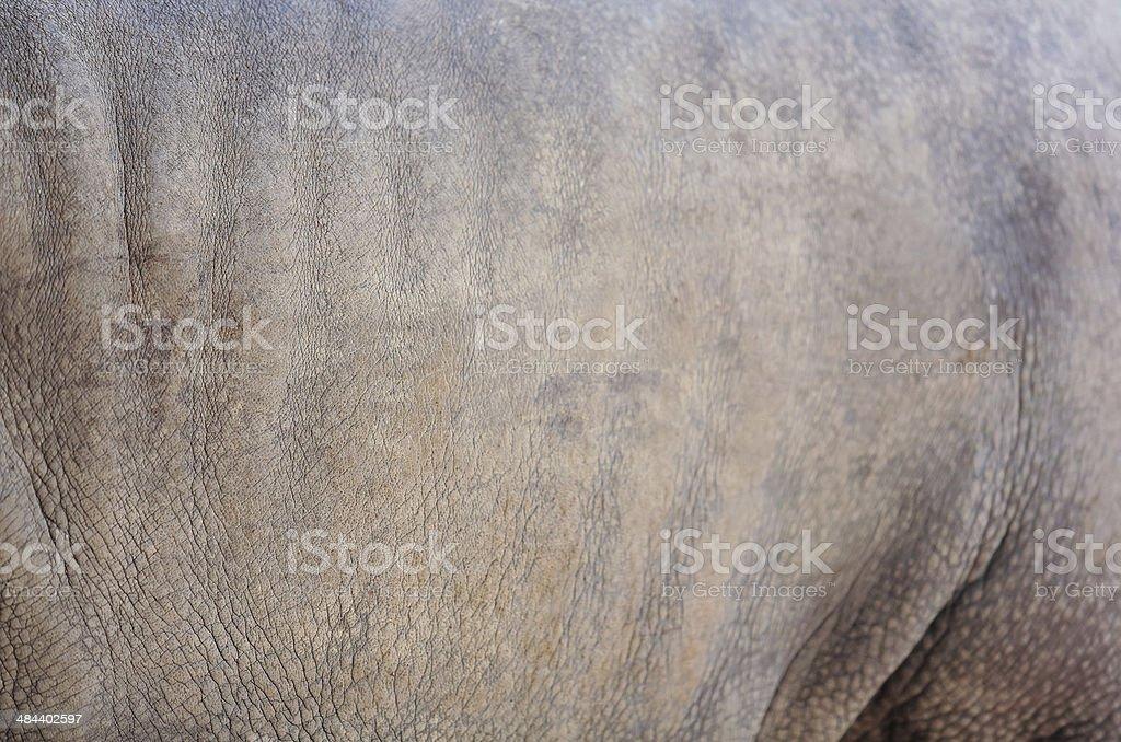 Rhino skin     . stock photo