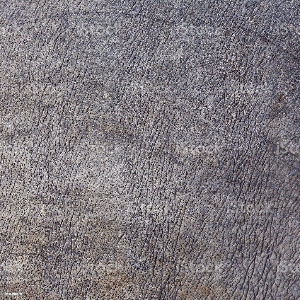 Rhino skin texture. stock photo