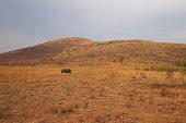 Rhinoceros in nature, Pilanesberg National Park, South Africa.