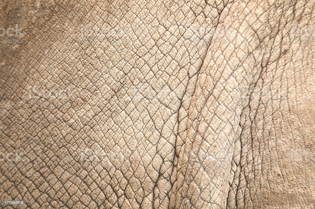 rhinoceros skin royalty-free stock photo