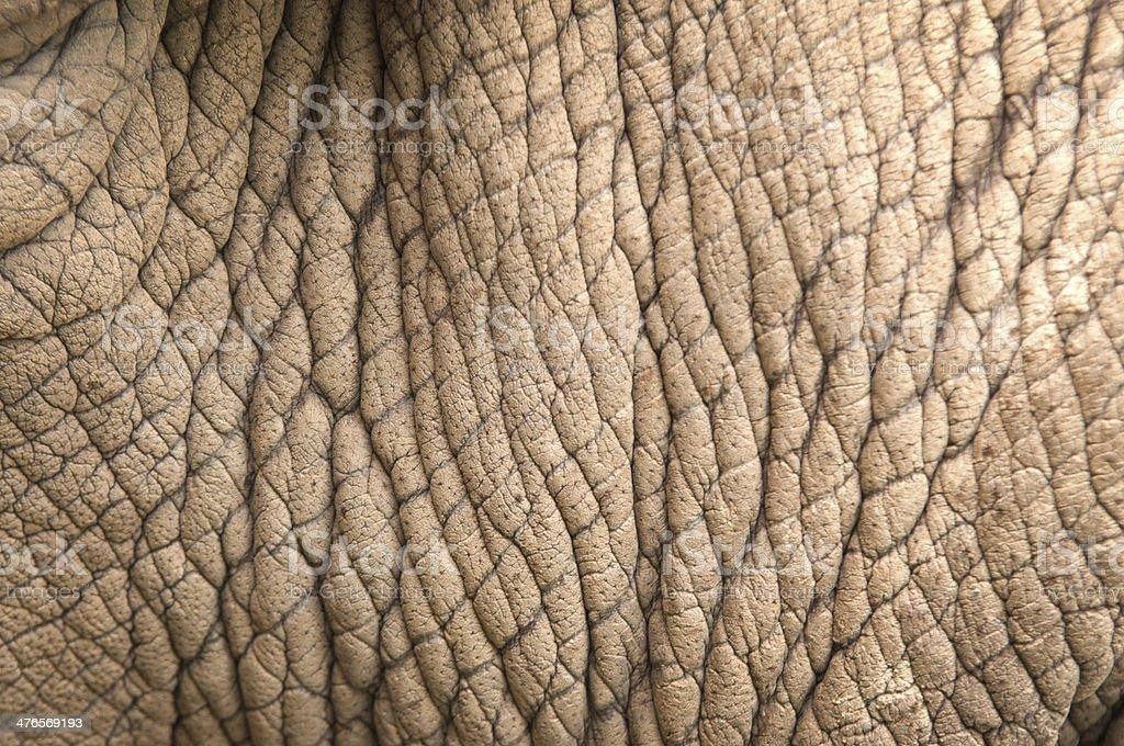rhinoceros skin stock photo