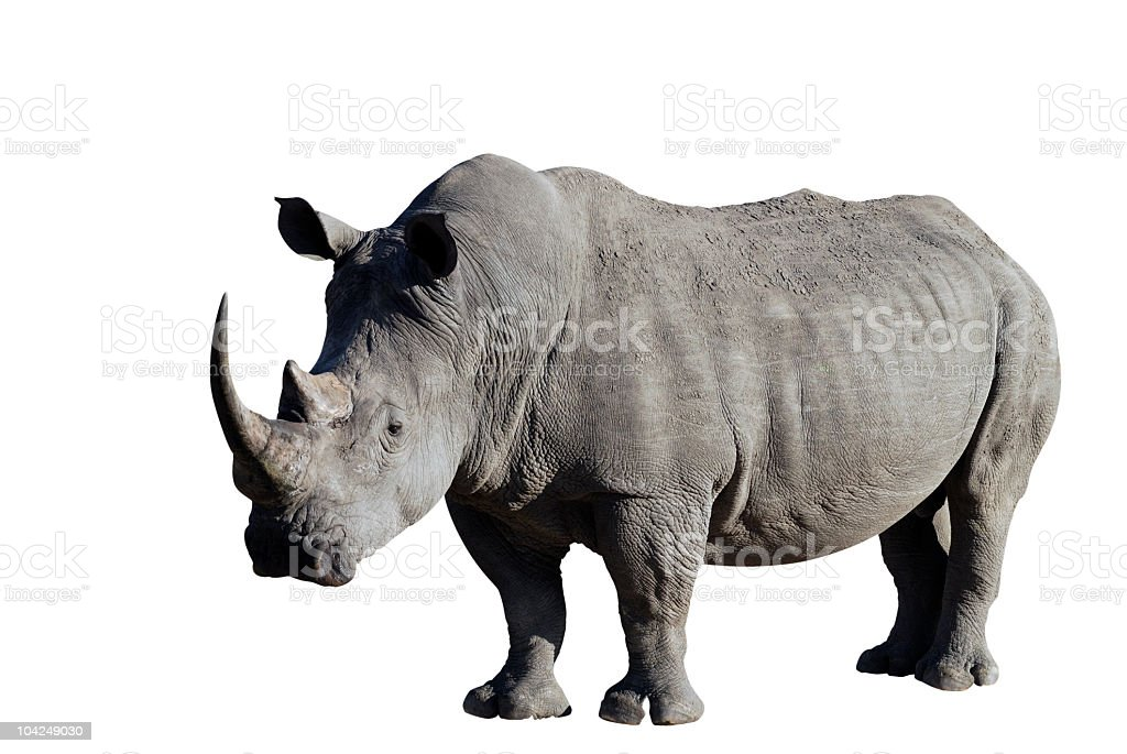 Rhinoceros with clipping path included royalty-free stock photo