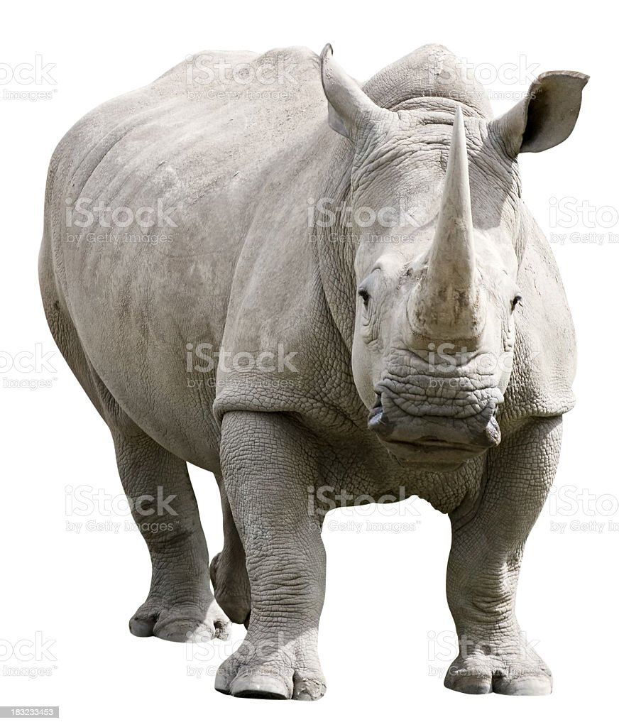 Rhinoceros with clipping path on white background stock photo