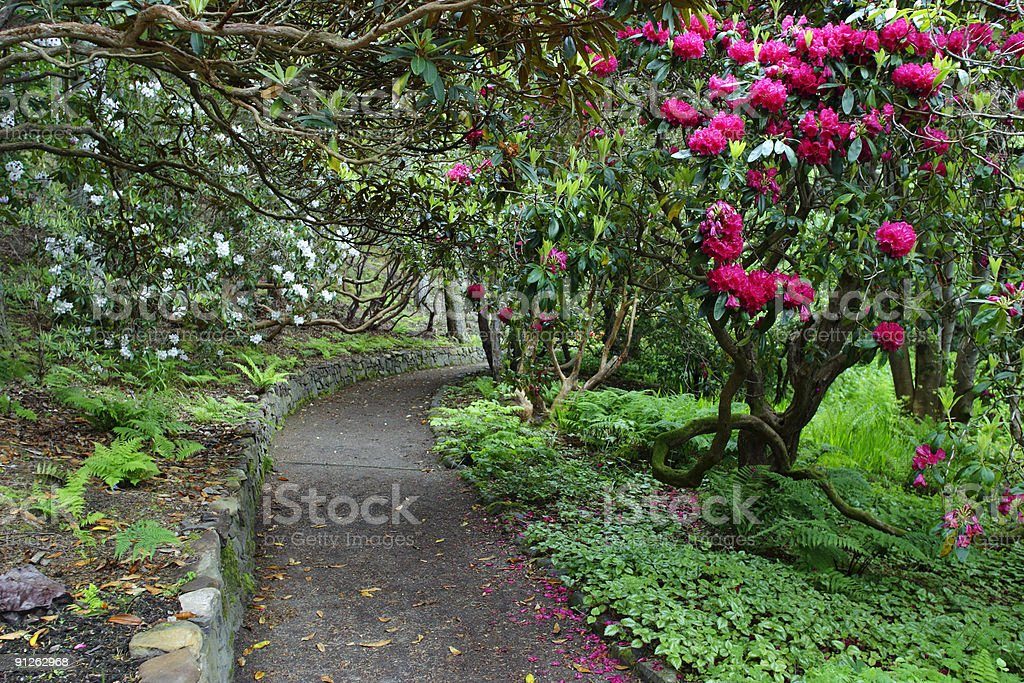Rhododendron park royalty-free stock photo