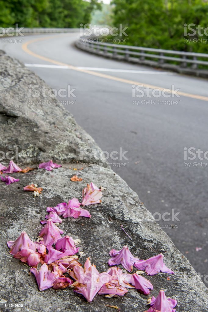 Rhododendron Petals on Side of The Road stock photo
