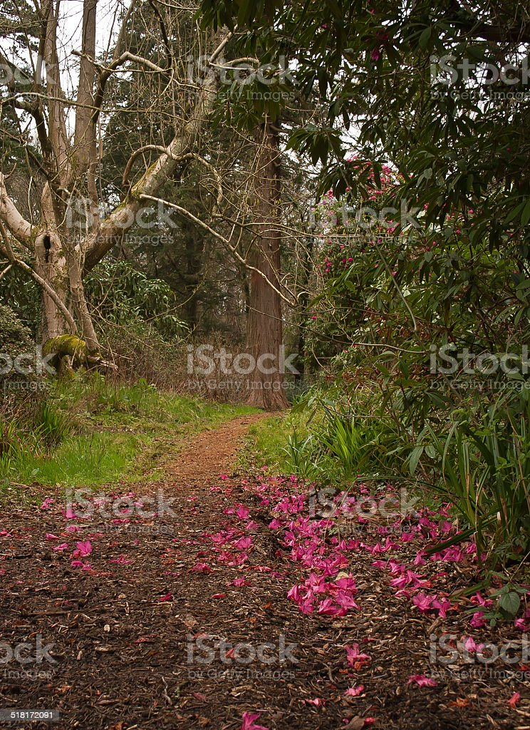 Rhododendron Woodland stock photo