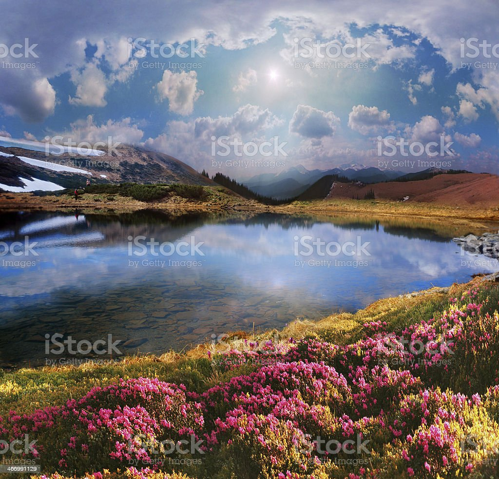 Rhododendrons of Carpathians royalty-free stock photo