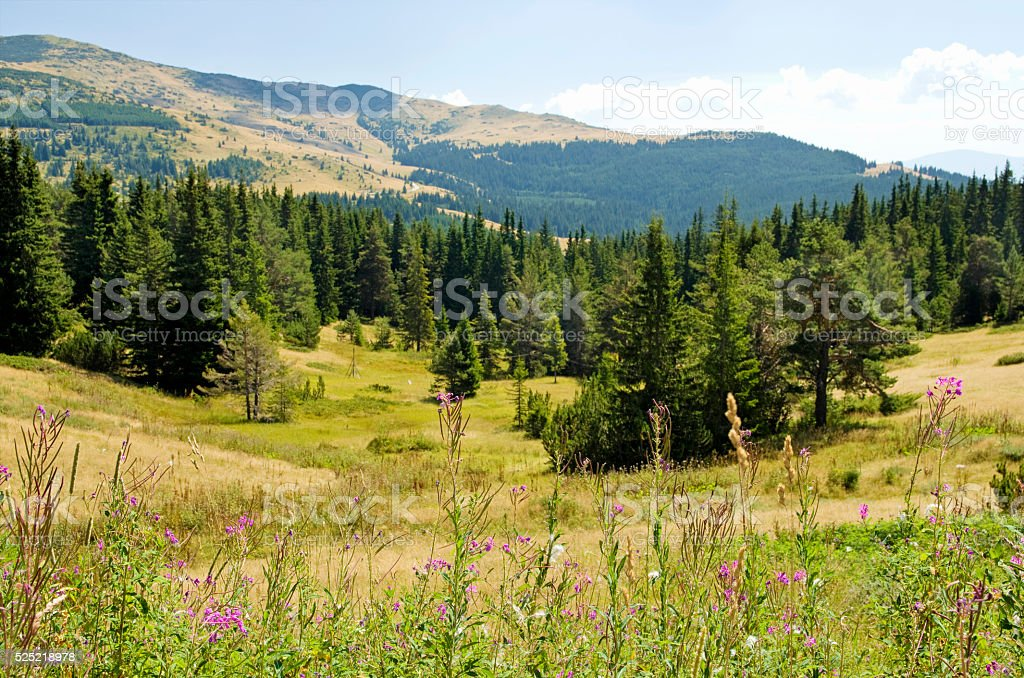 Rodopi mountain in Bulgaria royalty-free stock photo