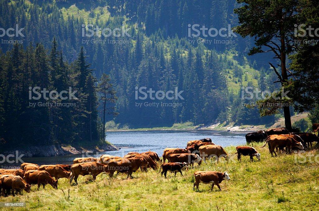 rhodope mountains stock photo