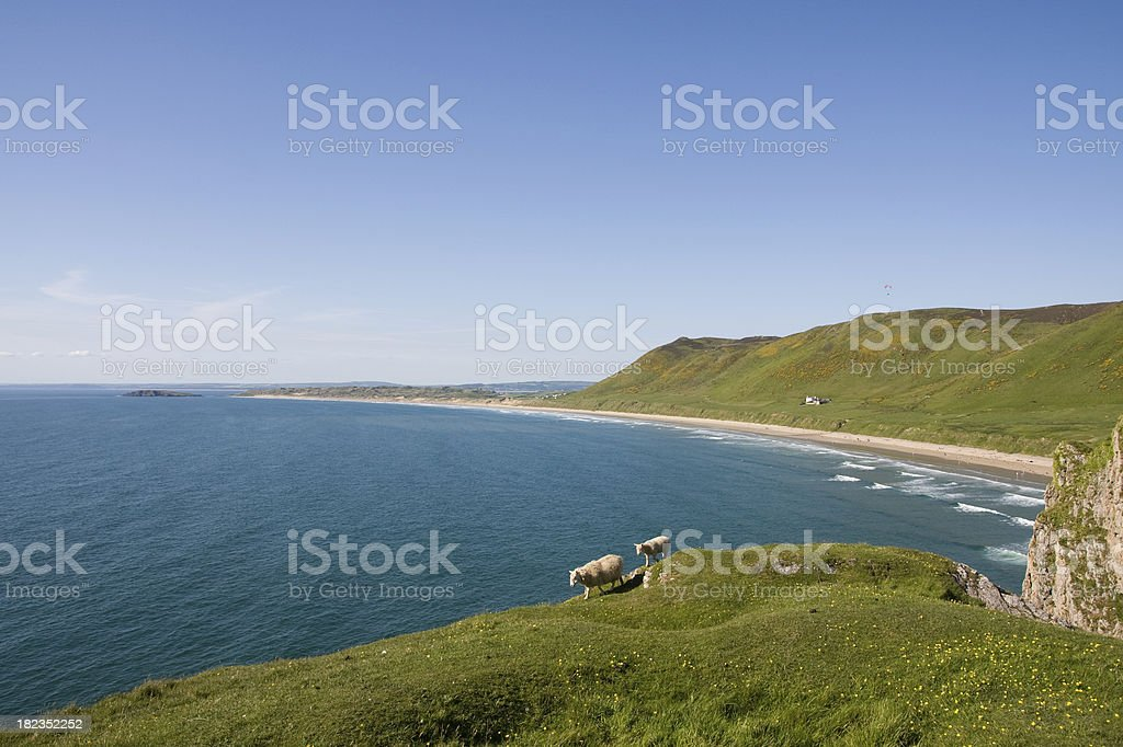 Rhossili Bay and beach with sheep in Wales stock photo
