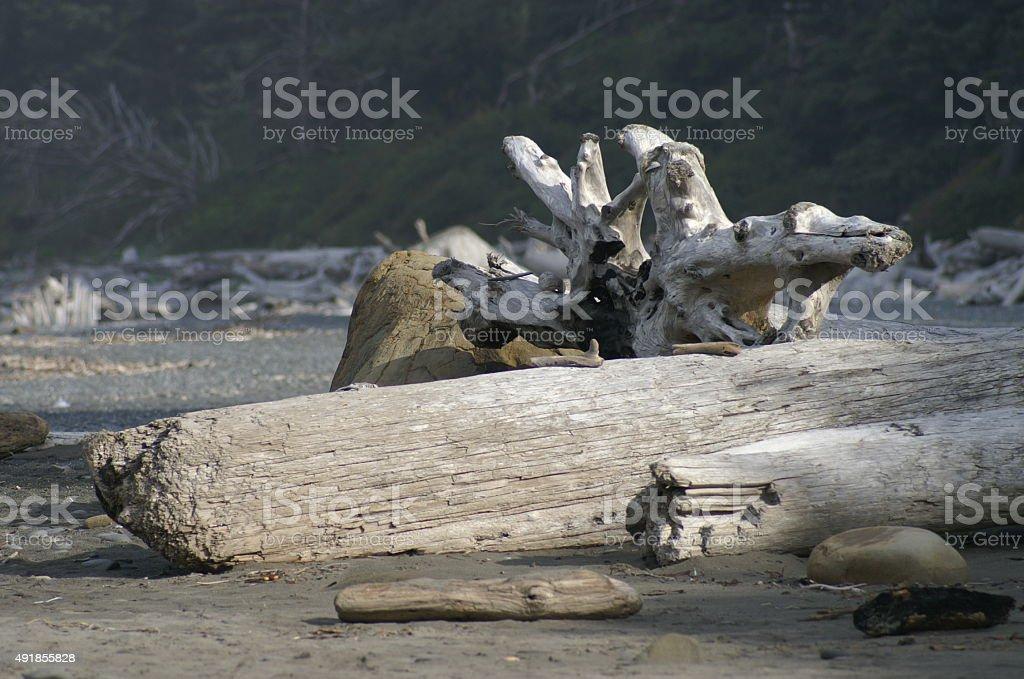 Rialto Beach Olympic National Parc stock photo