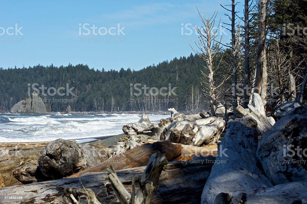 Rialto Beach Wood stock photo