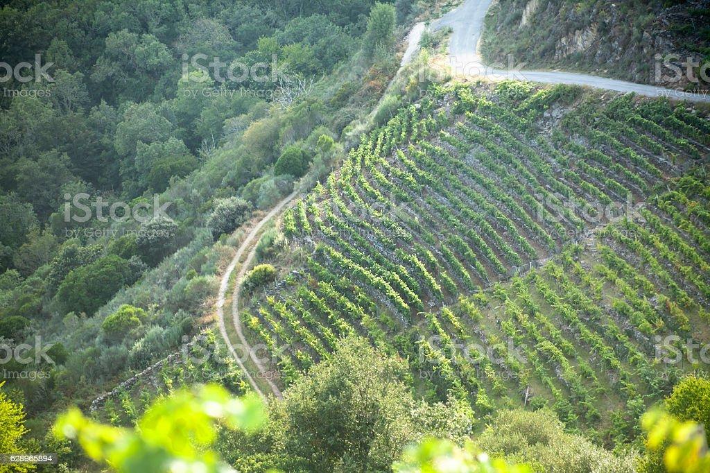 Ribeira Sacra landscape, vineyards in steep terraced fields. stock photo