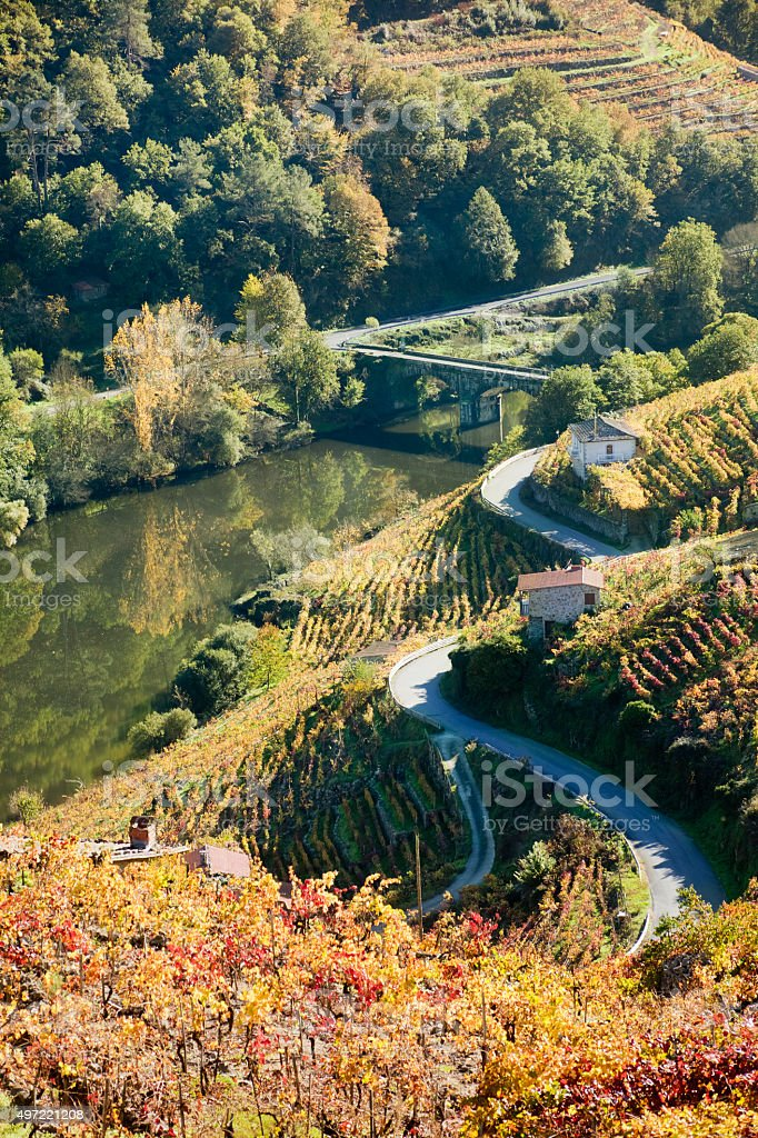 Ribeira sacra vineyards and river Miño, Galicia, Spain. stock photo