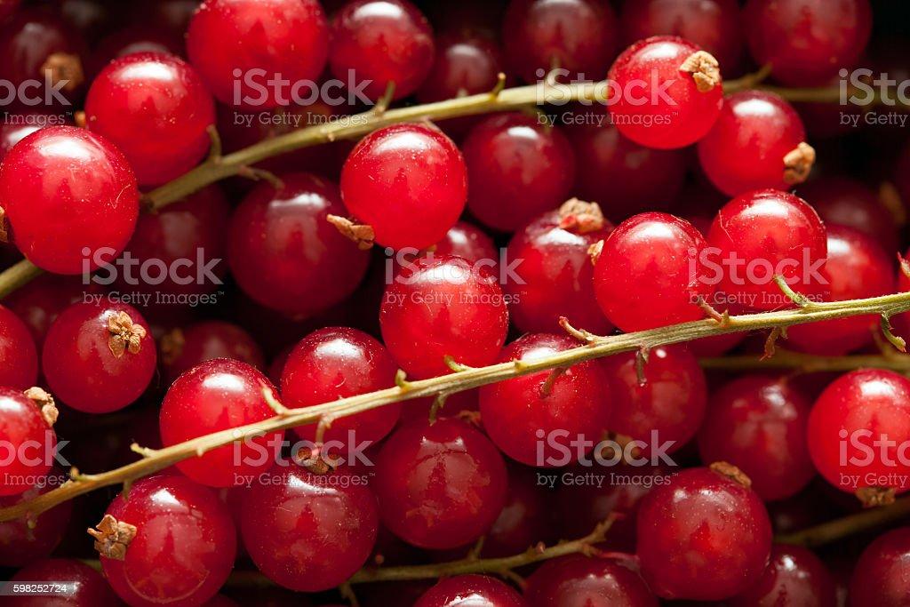 Ribes closeup stock photo