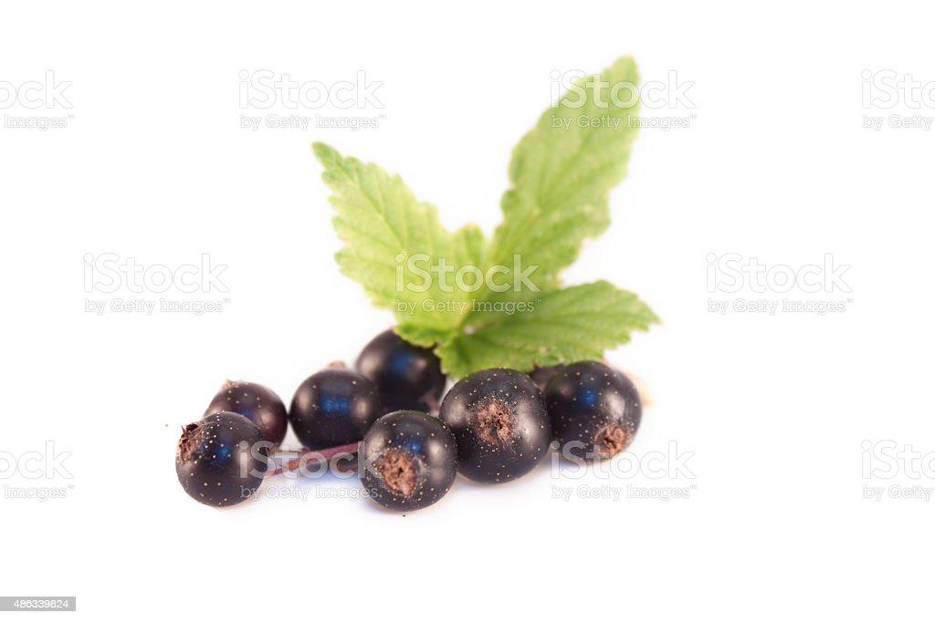 Ribes nigrum black currant isolated stock photo