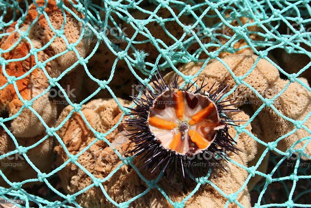 Ricci di mare, sea urchin royalty-free stock photo