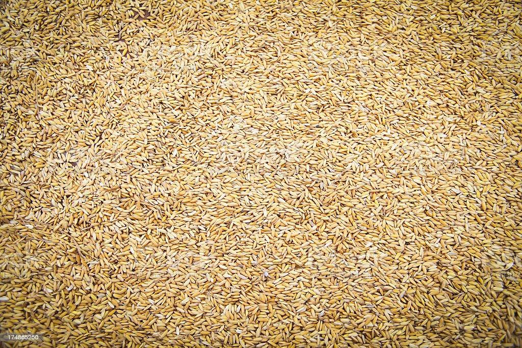 Rice background royalty-free stock photo