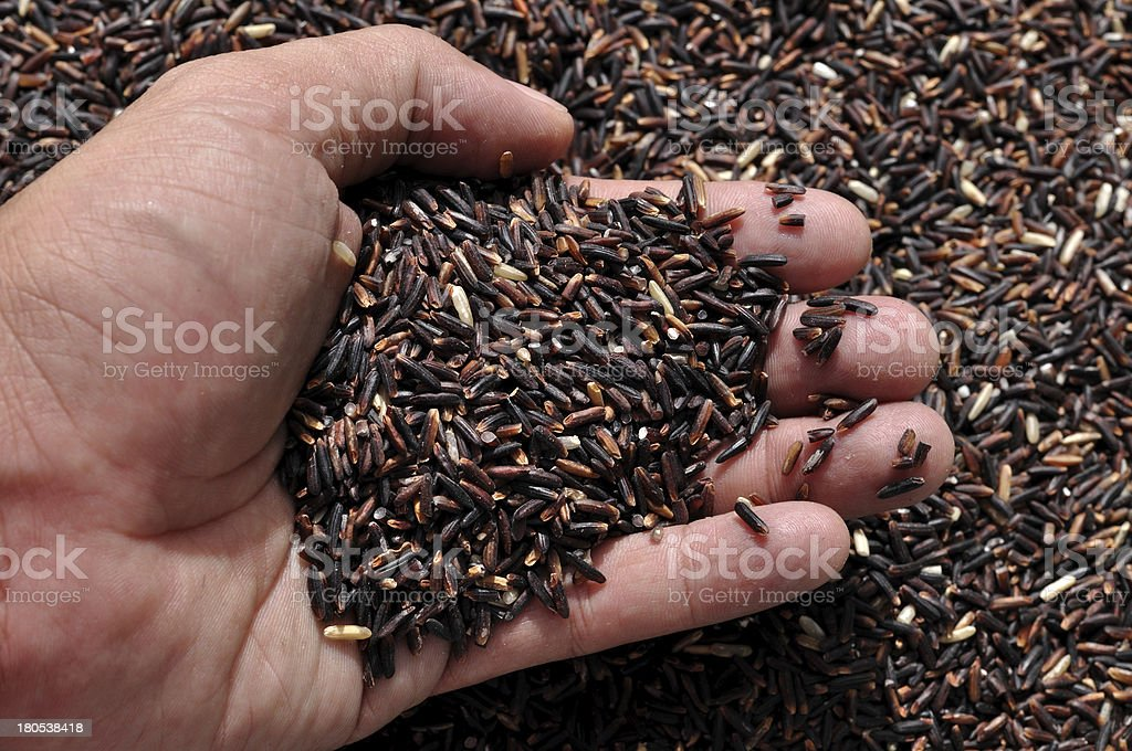 Rice Berry royalty-free stock photo