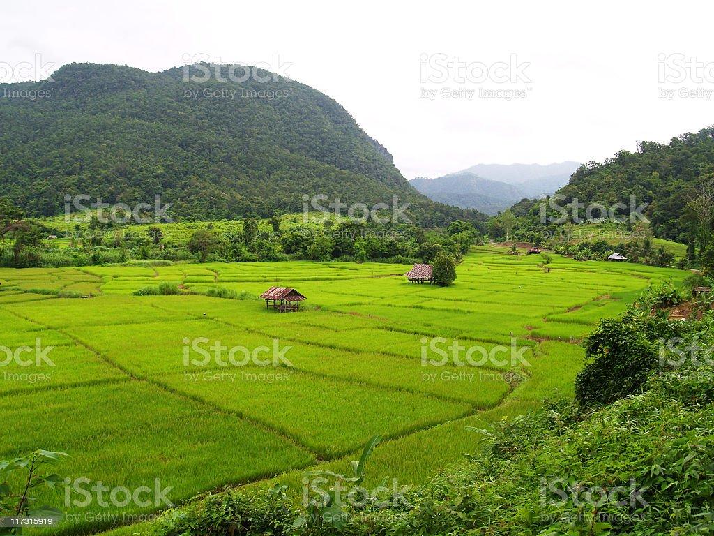 Rice farm and mountains stock photo