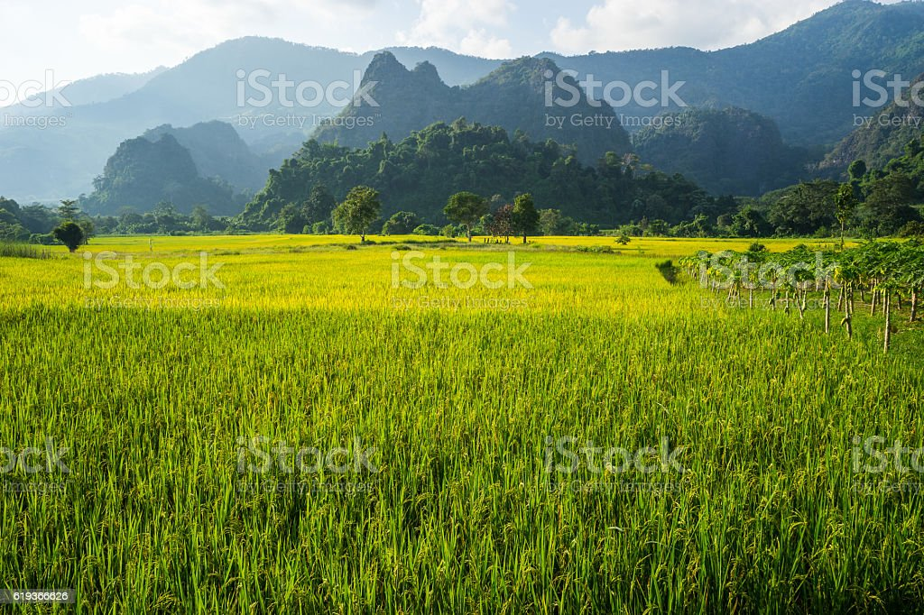 Rice farm beside hills  in up-country stock photo