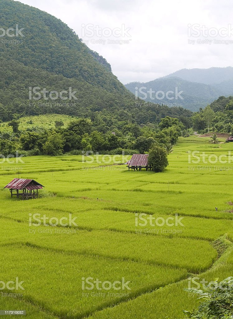 Rice farm between valley in the mountain royalty-free stock photo