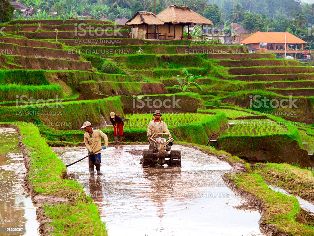 Rice farmers on Bali, Indonesia royalty-free stock photo