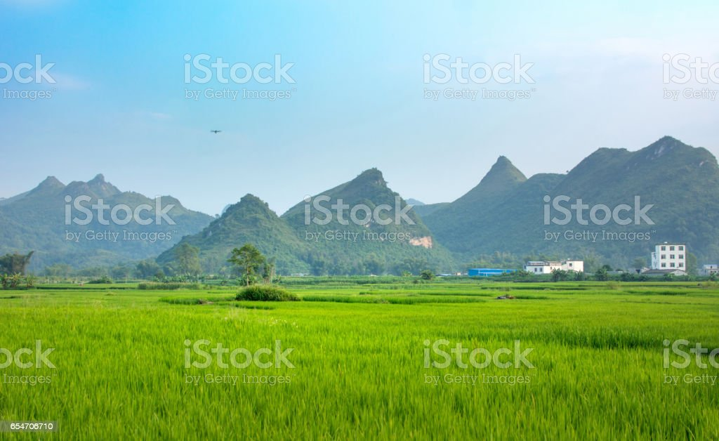 Rice field and karst scenery in Guangxi  China stock photo