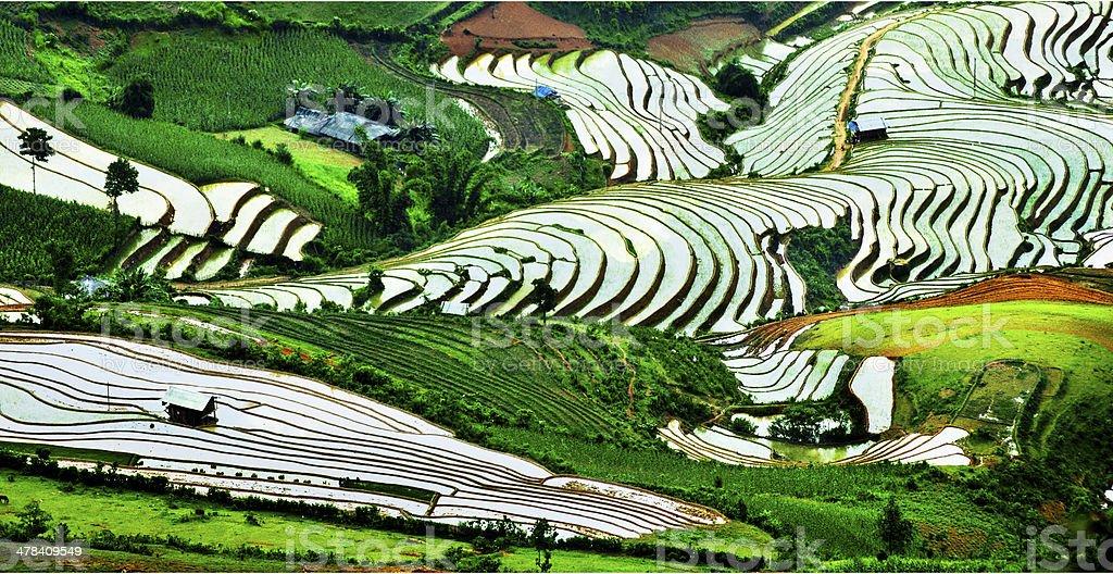 Rice field and river in NinhBinh, Vietnam stock photo