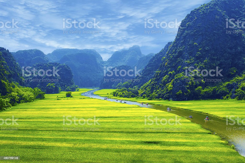 Rice field and river stock photo