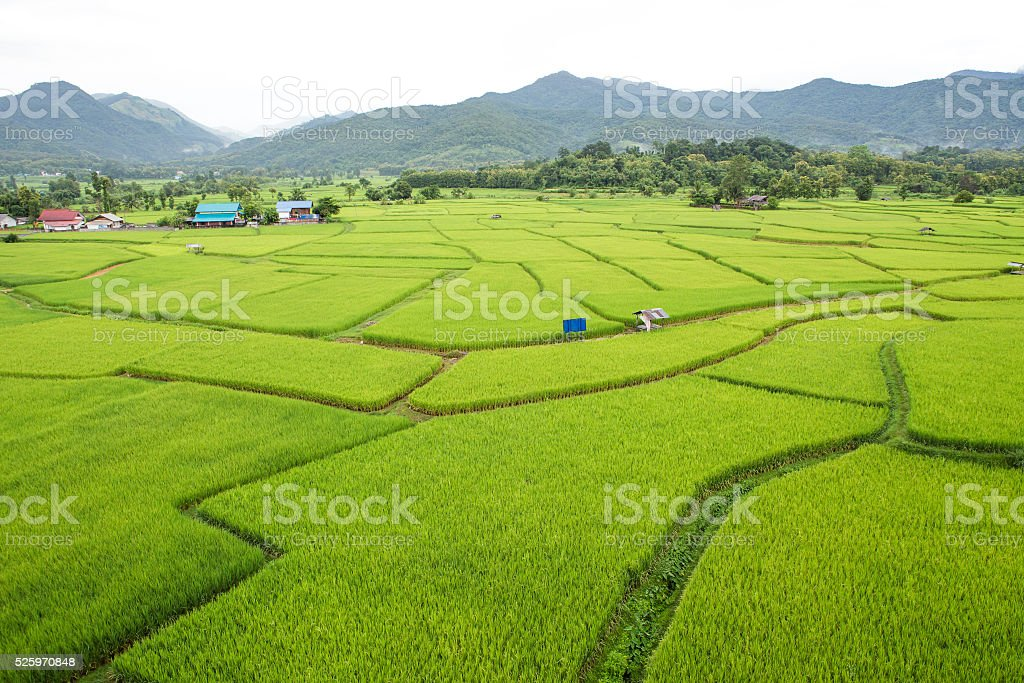Rice field at Nan Province, Thailand stock photo