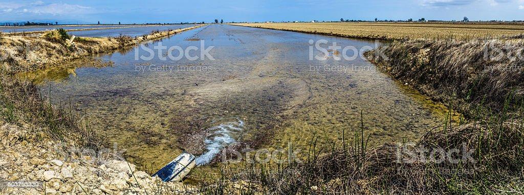 rice field delta ebre ebro fill water cultivation stock photo