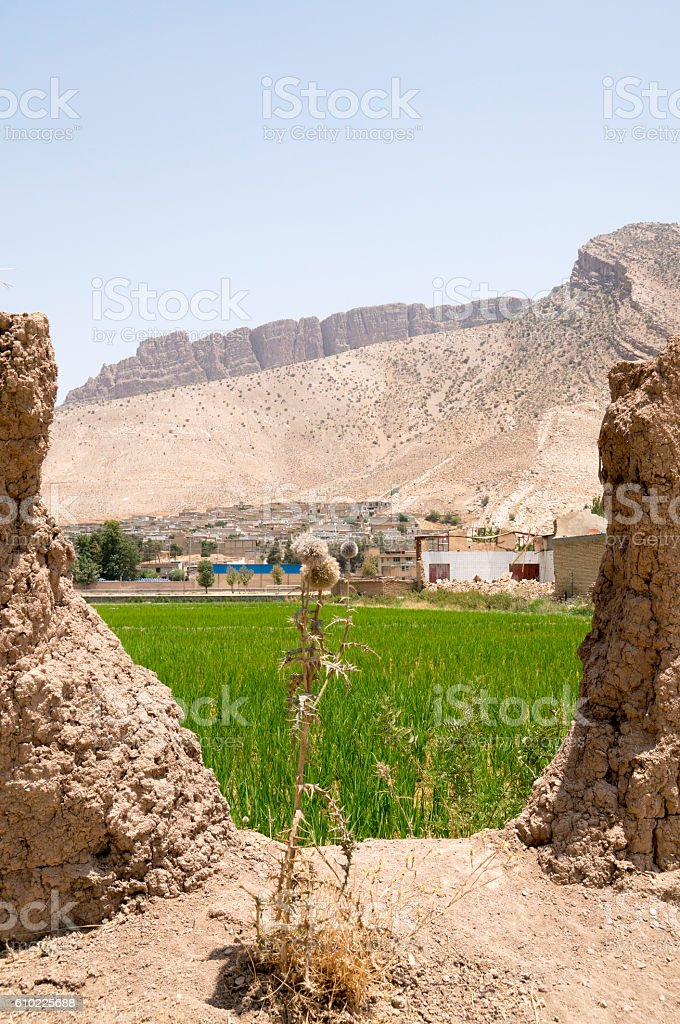 Rice Field in Iran stock photo