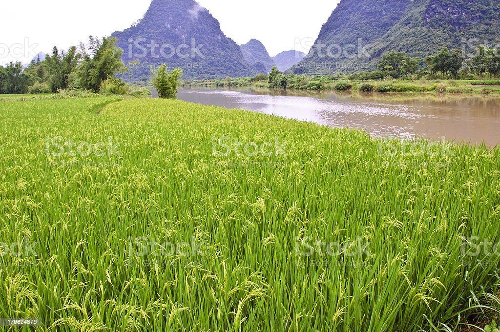 Rice field in Yangshuo royalty-free stock photo