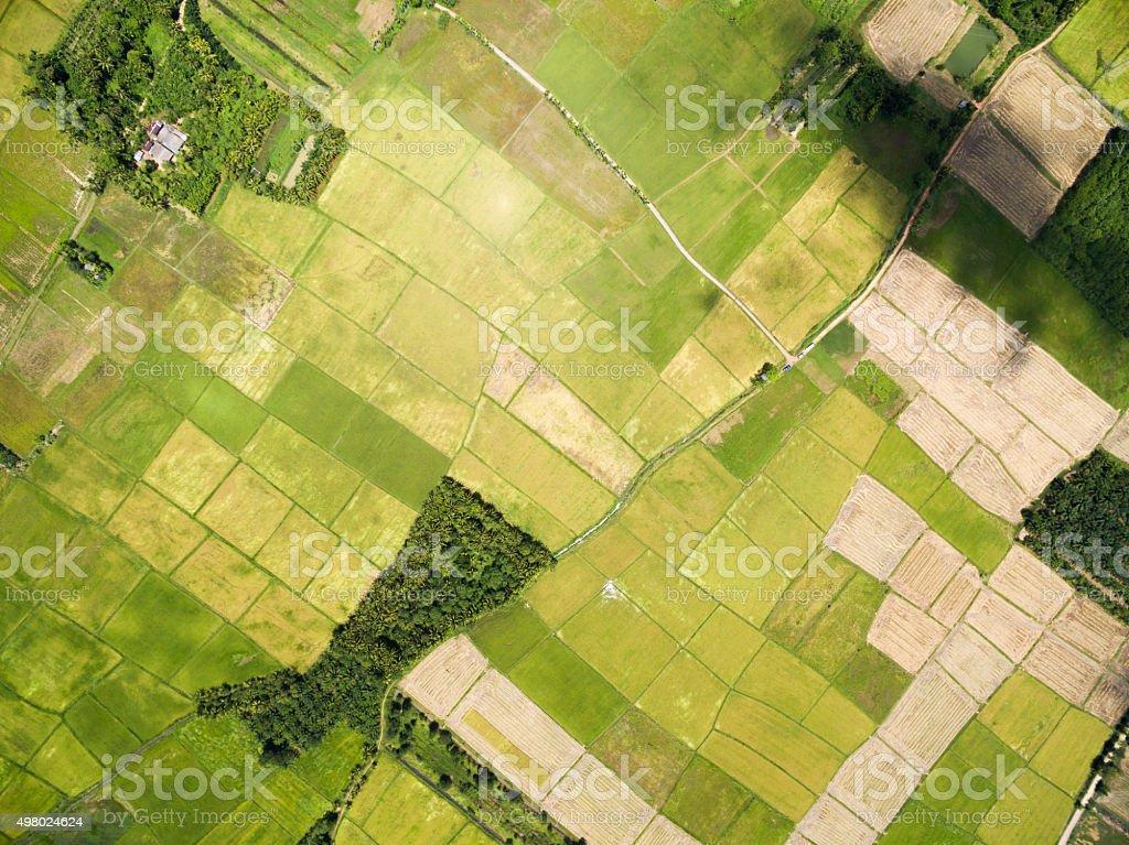 rice field plantation pattern stock photo