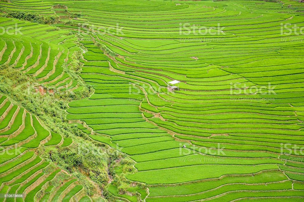 Rice field terraced in Tule village, Vietnam stock photo