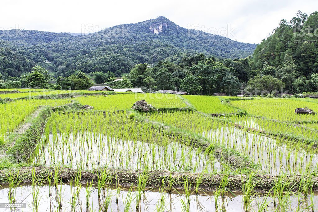 Rice field terraces in doi inthanon, Ban Mae Klang Luang stock photo