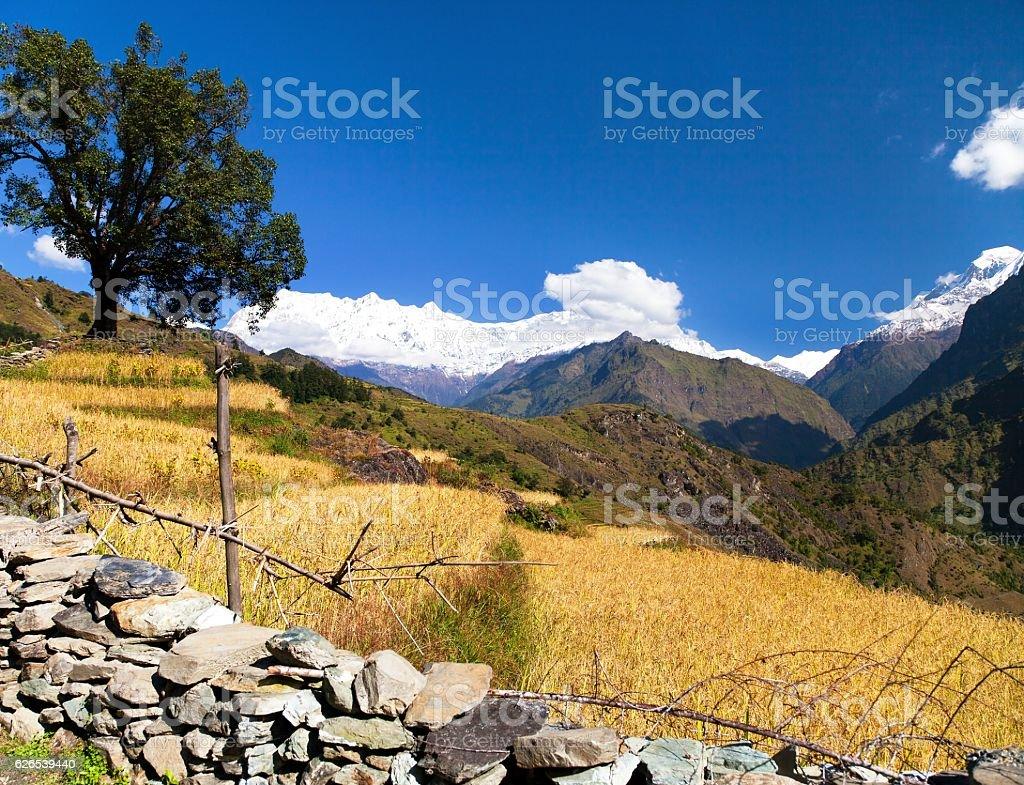 Rice field under Dhaulagiri Himal stock photo
