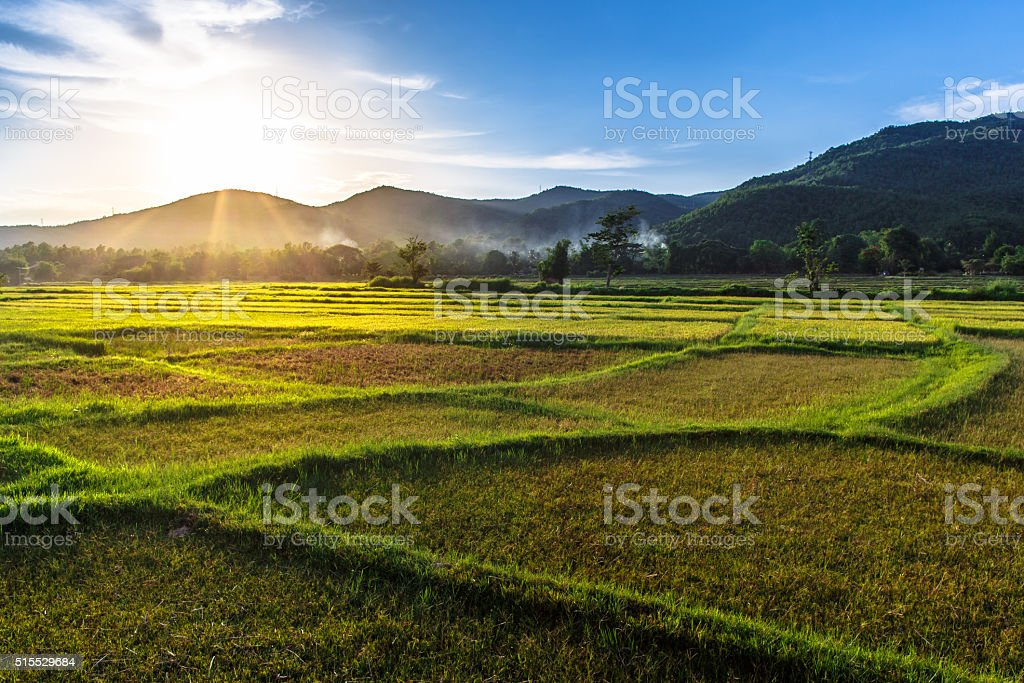 Rice field with mountain sunset background stock photo