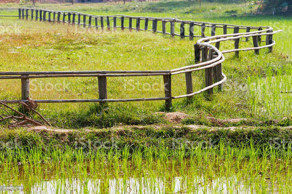 Rice field. Zigzag shaped wooden fence. Cambodia. stock photo
